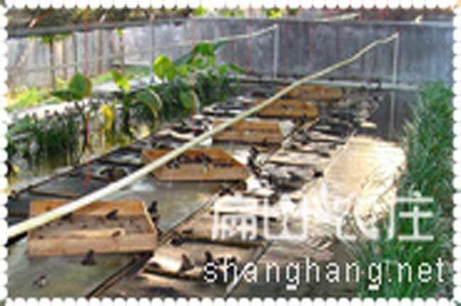 福建石蛙养殖基地