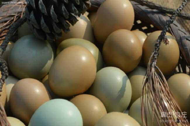 纯太生态野鸡蛋价格