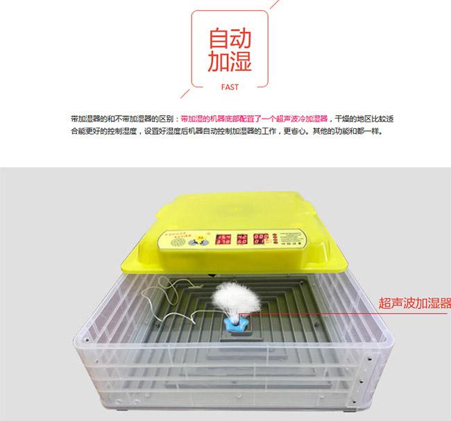 鸵鸟蛋家用孵化机