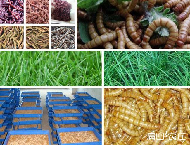 扁山农庄土鸡食物展示