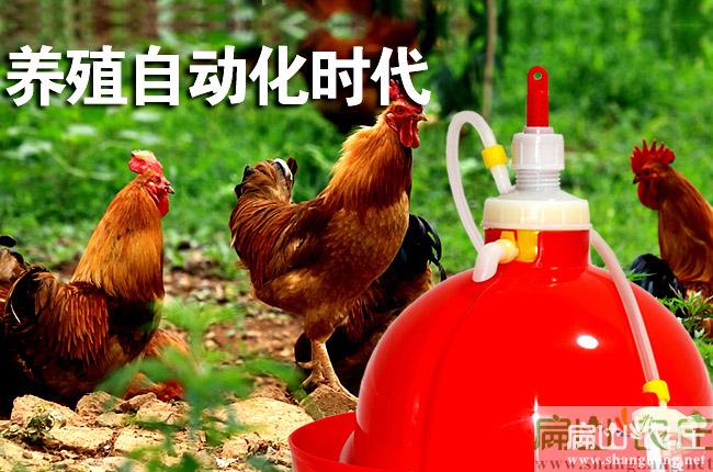 龙岩喂鸡饮水壶厂家