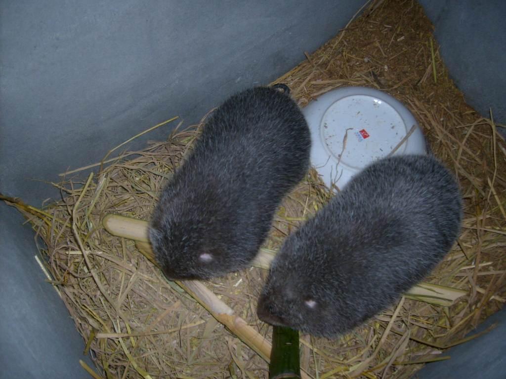 广西竹鼠养殖池子