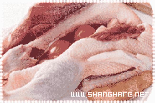 新疆土鸡养殖基地