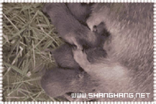 福建竹鼠繁殖基地