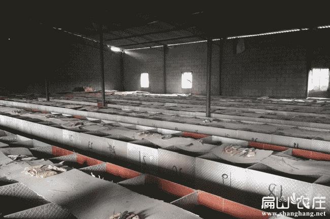 上杭中华竹鼠养殖基地