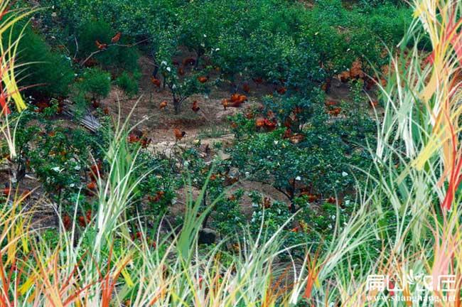 武汉最大的生态果园养殖基地