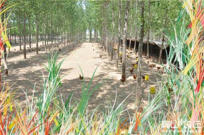 恩施最大的土鸡养殖基地
