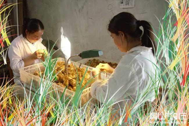 零陵最大的土鸡苗孵化基地