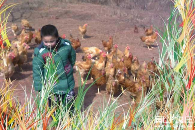 常德最大的散养土鸡养殖场