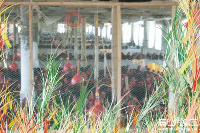 土鸡养殖基地鸡舍建设