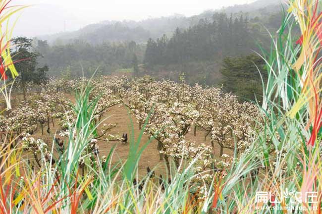 河南生态土鸡养殖基地