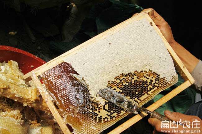 宁德蜂蜜基地