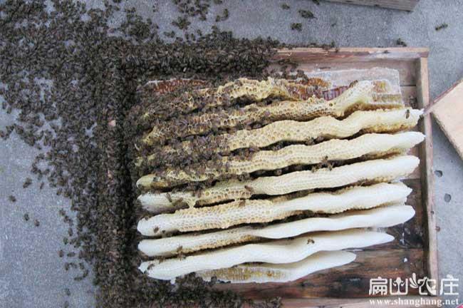 福建蜂蜜基地