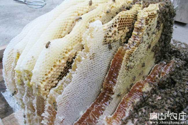 泉州蜂蜜基地
