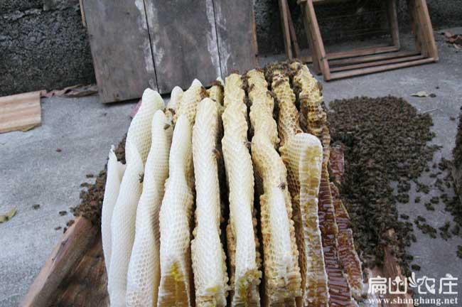 三明蜂蜜基地