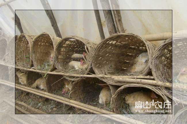 农村创意鸡舍设计展示