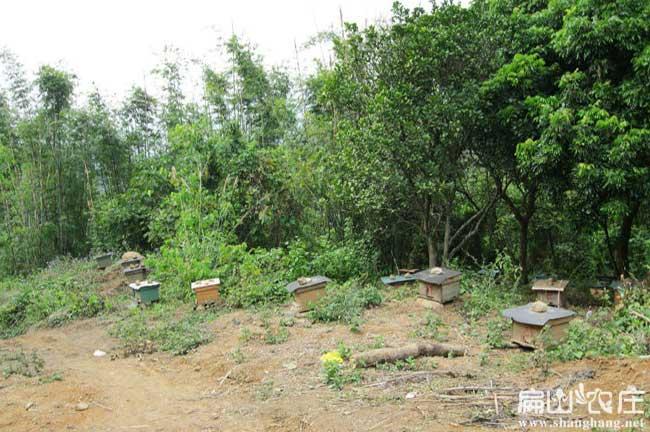 扁山蜂蜜养殖场