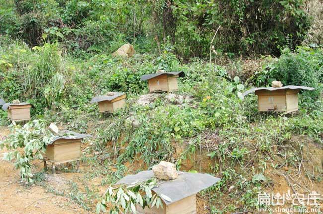 龙岩蜂蜜场