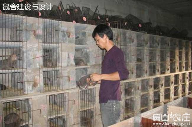 最新立体竹鼠养殖窝设计