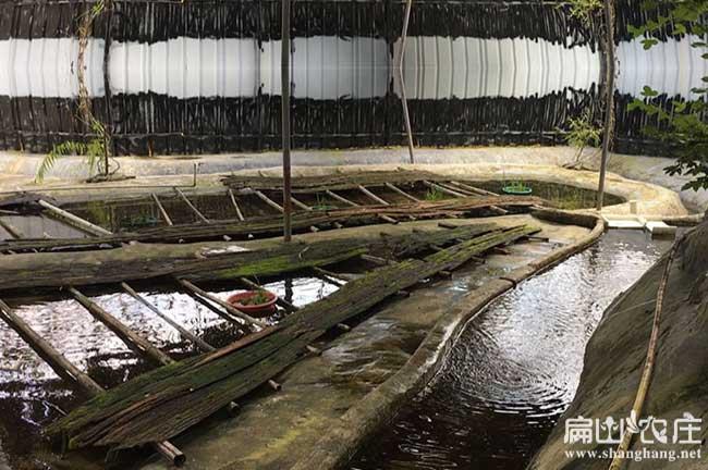 石蛙养殖技术的关键