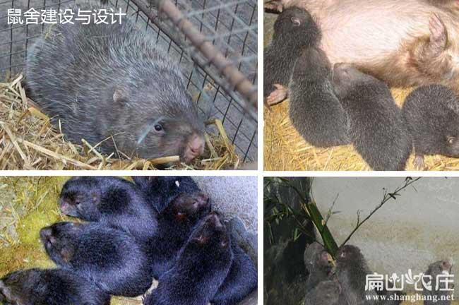 竹鼠养殖中国