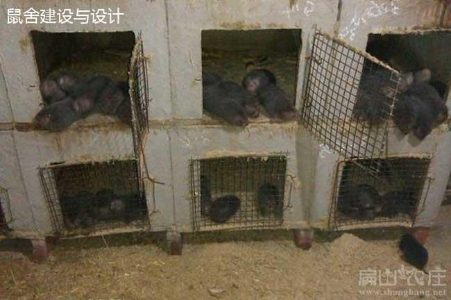 新疆竹鼠养殖池设计