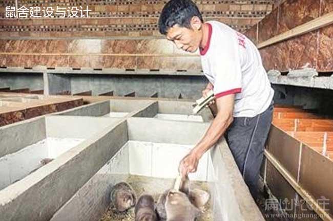 贺州最大的竹鼠养殖合作社
