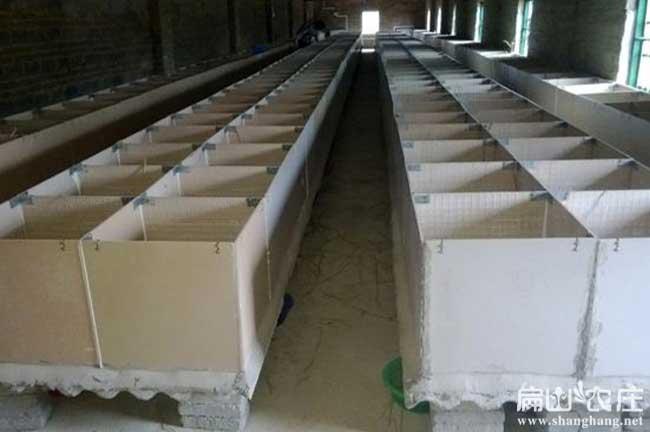 贵州竹鼠养殖基地