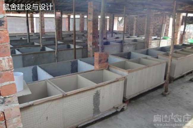云南红颊竹鼠养殖基地i