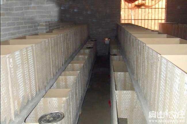 甘孜最大的竹鼠养殖基地