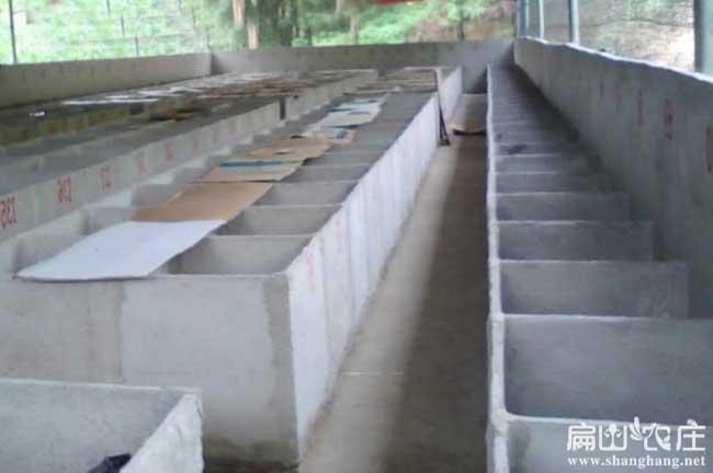 最标准的竹鼠养殖基地图片