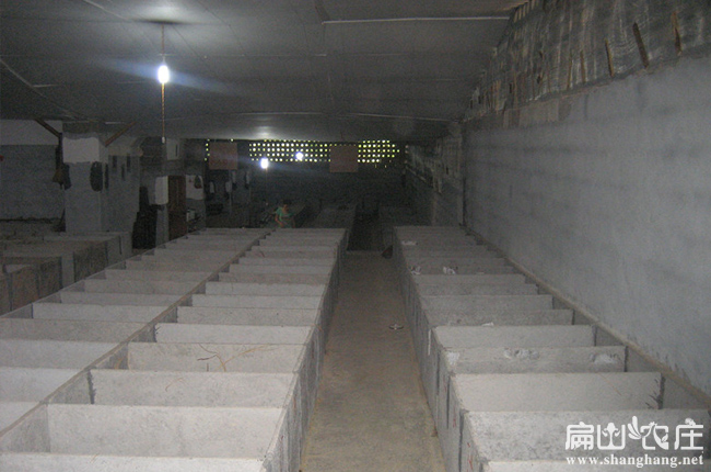 竹鼠养殖技术培训