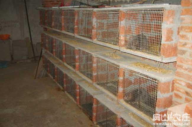 龙岩立体养殖竹鼠