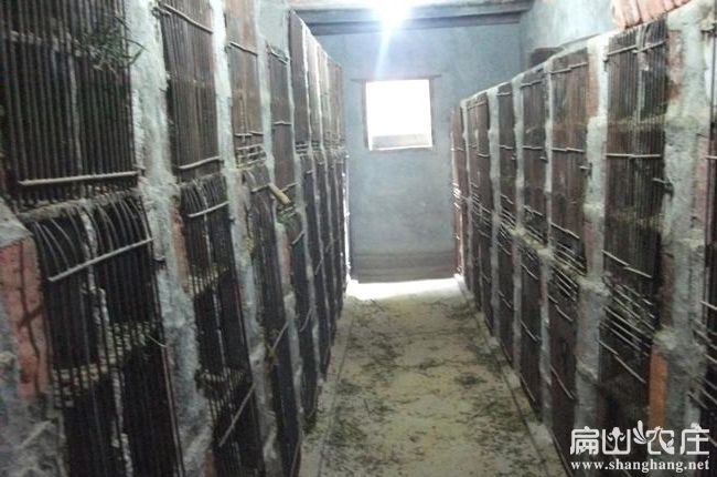 阿克苏立体竹鼠养殖基地