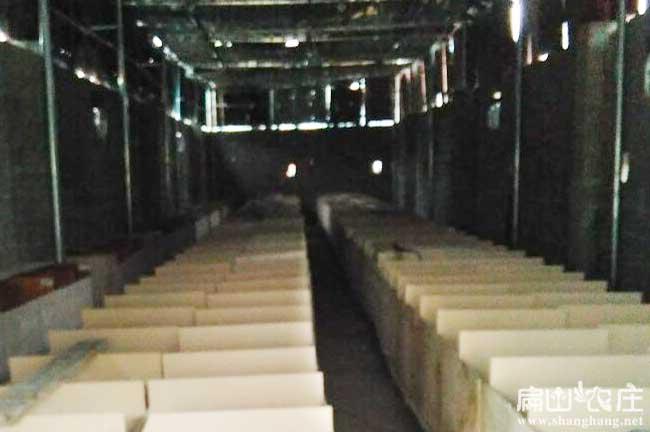 湖南竹鼠养殖基地