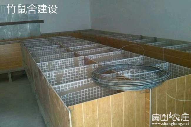 最新平面养殖竹鼠池建设