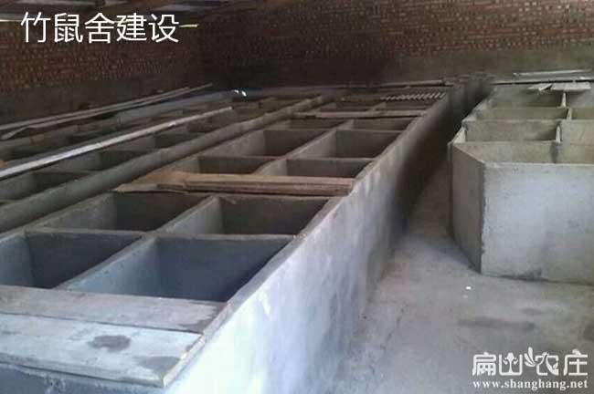 平面养殖竹鼠池的建造