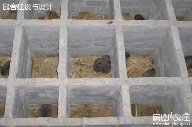 竹鼠窝的建造方法