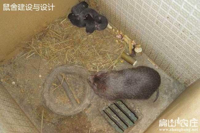 中国竹鼠销路