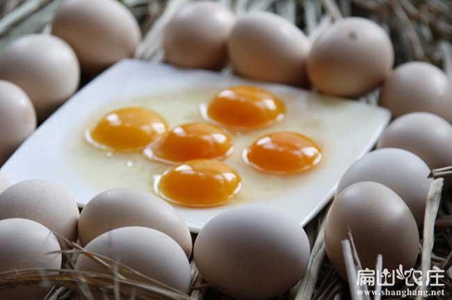 福建最好的土鸡蛋批发中心