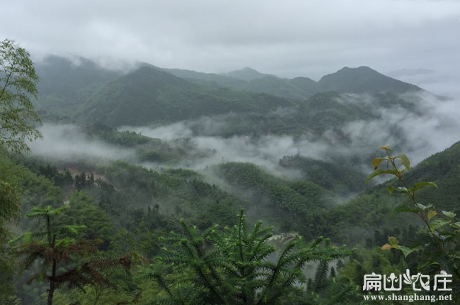 云南最大土鸡养殖基地