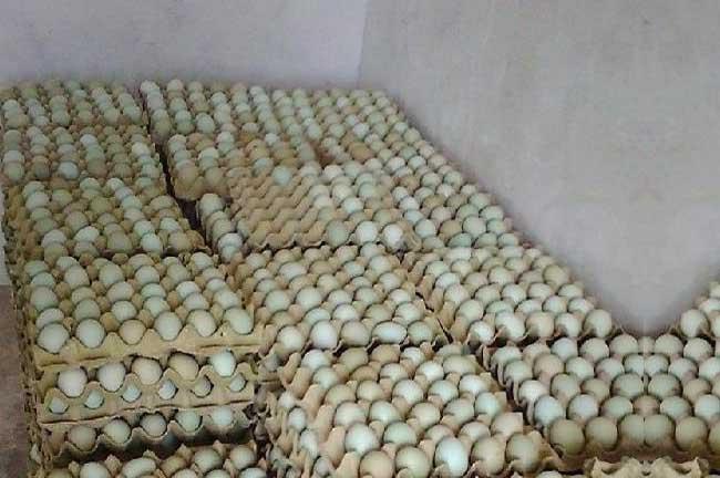 湖南生态土鸡蛋批发价格