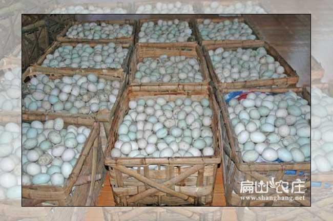 福建鸭蛋孵化机