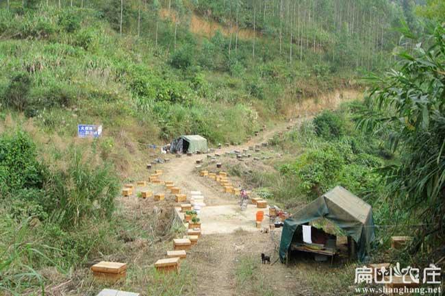 福建扁山竹鼠养殖基地小路