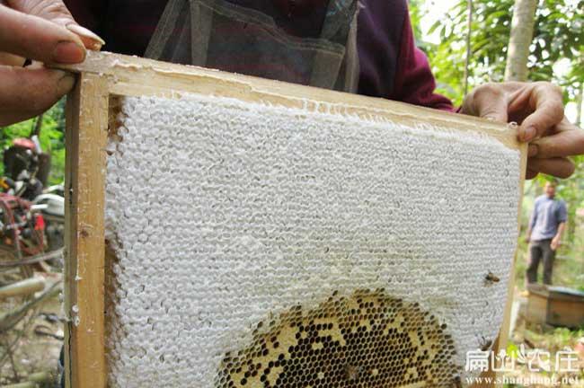 福建蜂蜜厂