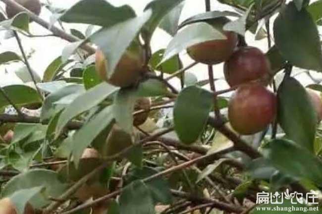 桂林油茶种植合作社