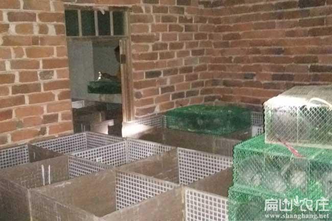 竹鼠养殖基地对中药的作用