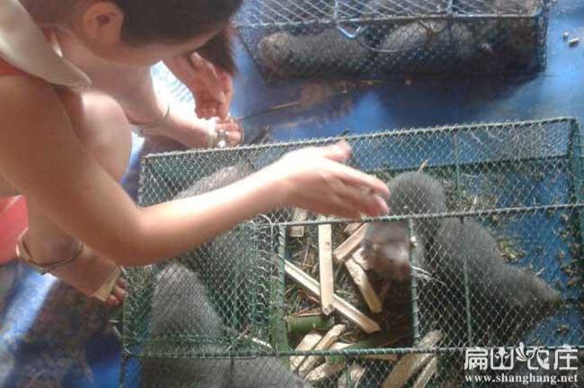 竹鼠养殖最好方法