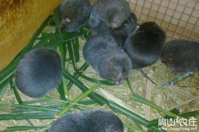贵港大规模兔子养殖基地