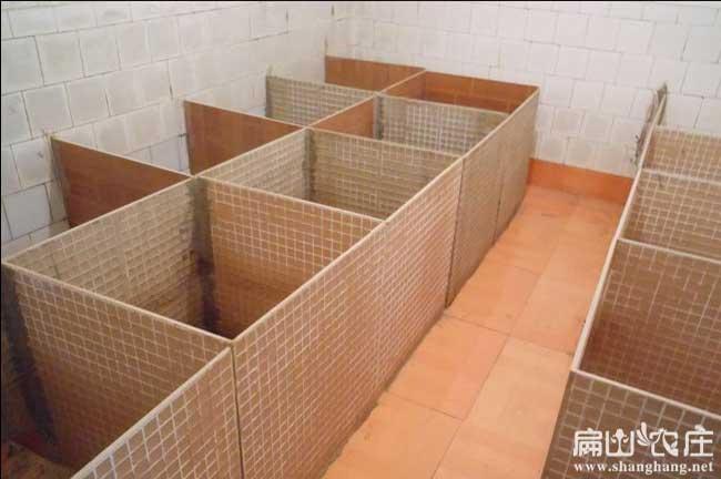 扁山竹鼠养殖池建设参考